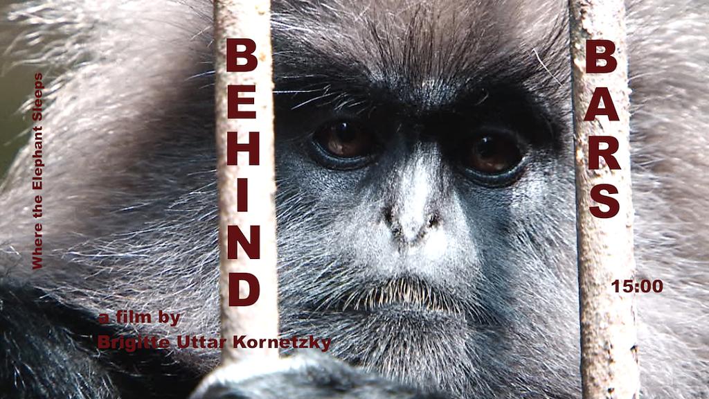Behind-Bars-214815.png